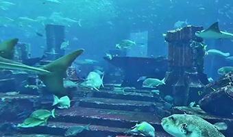 The Lost Chambers (Aquarium At Atlantis)